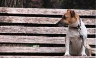 Adoptar o morir, animales abandonados