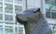 Hachiko, la historia del perro fiel