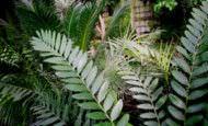 bienestar-personal-plantas-interior-espiritualmente