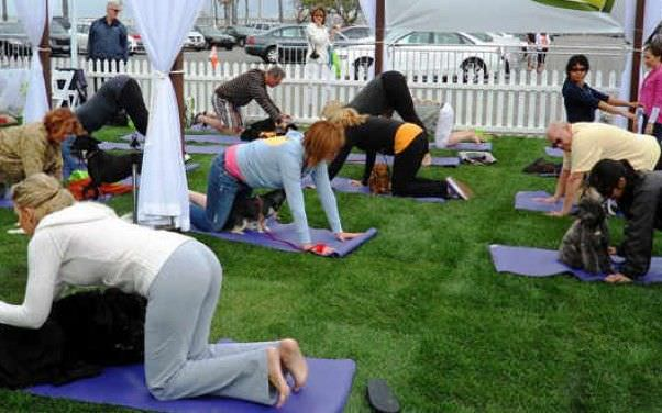 Terapias para animales: Yoga para perros