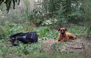 """La historia del """"Hachiko catalán"""", el perro fiel"""