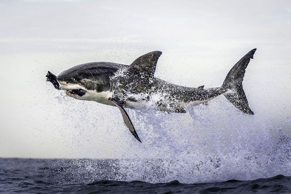 Fotografías sorprendentes e increíbles de la naturaleza