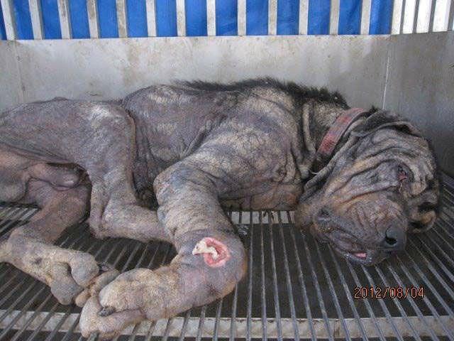 Un perro salvado de la eutanasia y vuelve a tener una vida feliz
