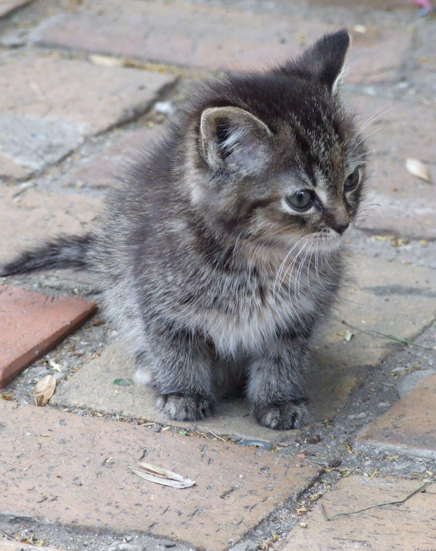 Vídeo: Gatos que ven a bebés por primera vez