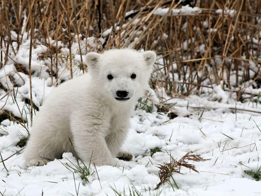 Los animales más suaves y adorables del mundo