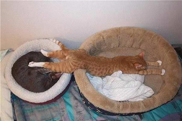 Gatos durmiendo en lugares inimaginables