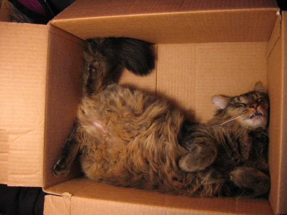 gatos-durmiendo-lugares-inimaginables-espiritualmente-5