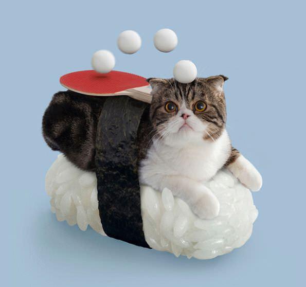 Los sushi cats: gatos disfrazados de piezas de sushi