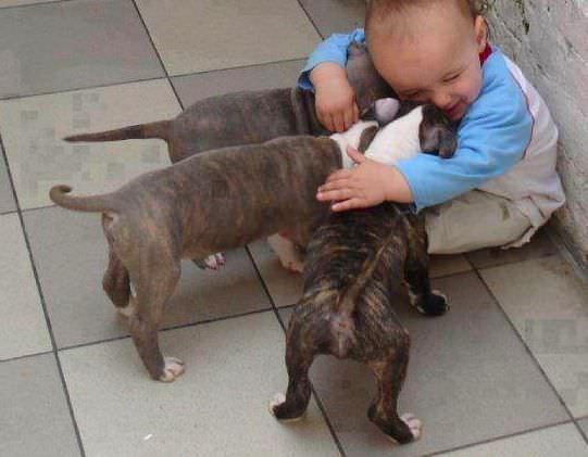 Amistades inseparables: los niños y sus mascotas