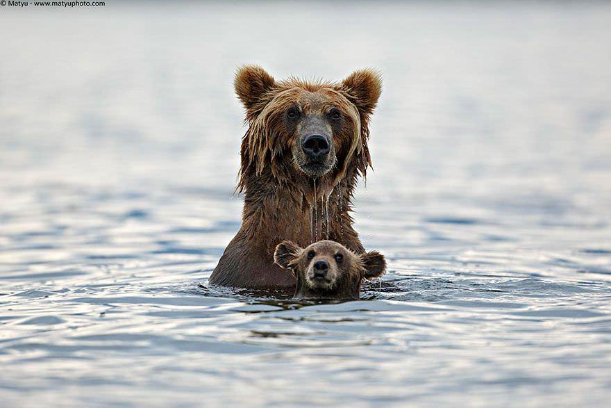 El instinto maternal (y paternal) de los animales