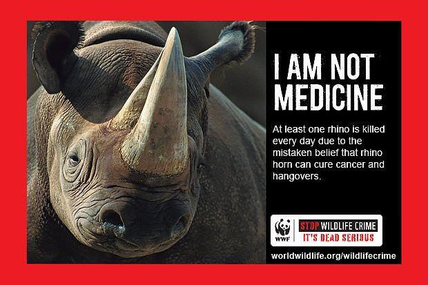 Las mejores campañas para defender los animales 2