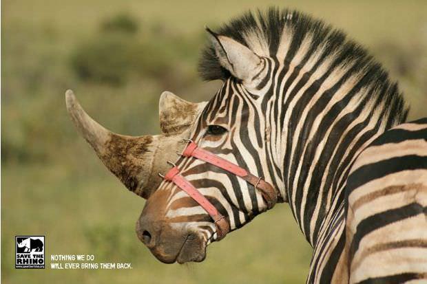 Las mejores campañas para defender los animales 4
