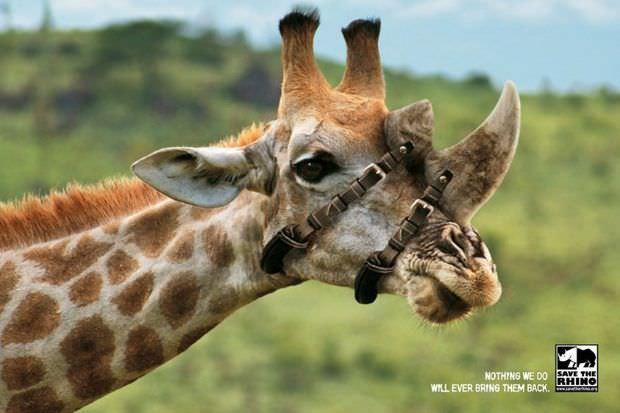 Las mejores campañas para defender los animales 5