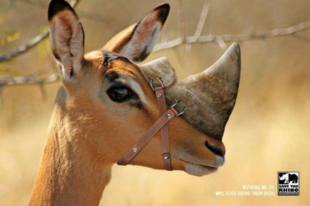 Las mejores campañas para defender los animales 6