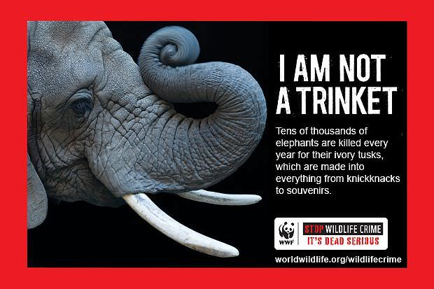 Las mejores campañas para defender los animales 8
