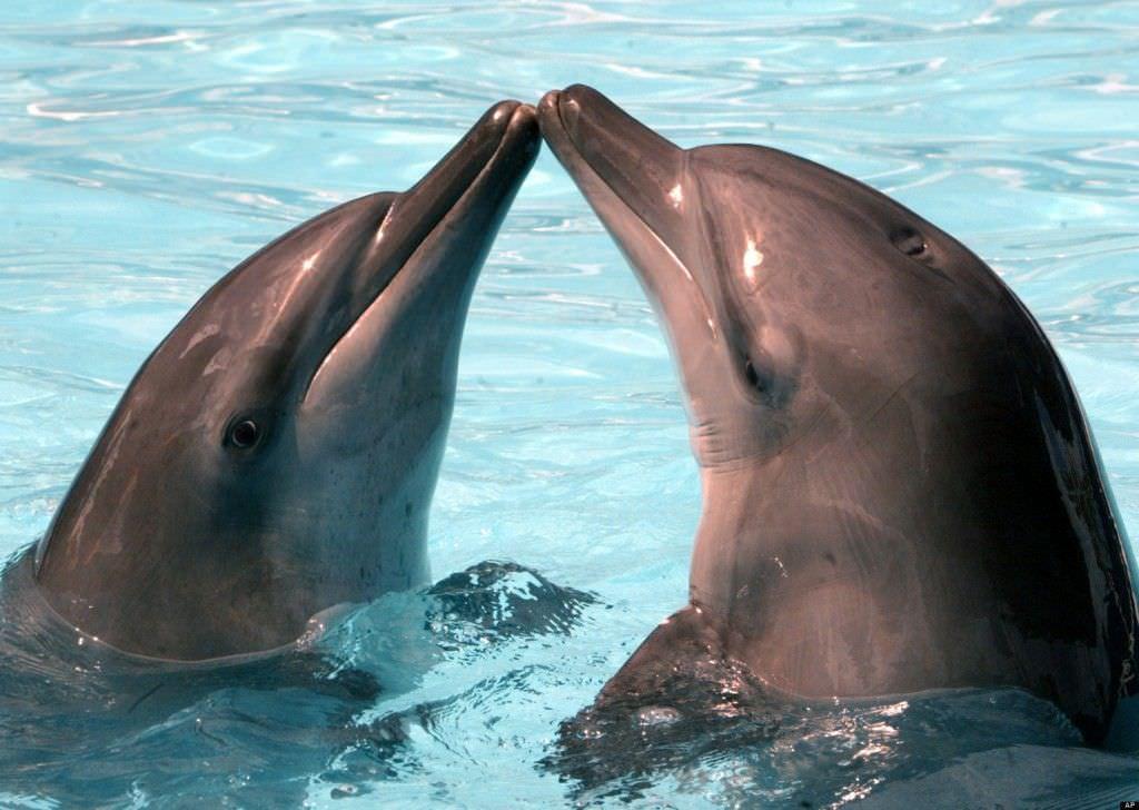 Amor y relaciones de pareja entre animales