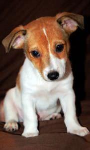 Curiosidades sobre perros que seguro que no sabías antes