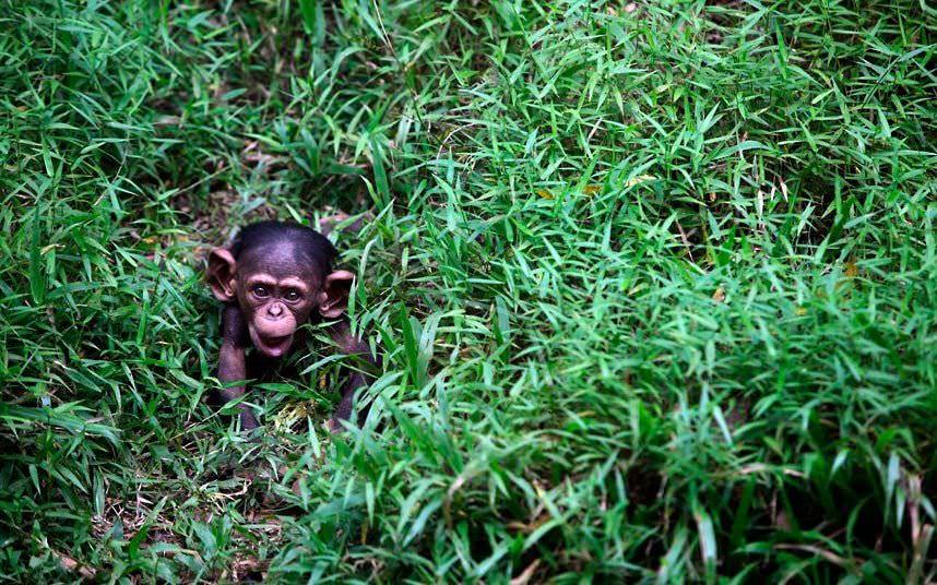 Increíbles fotografías de animales salvajes