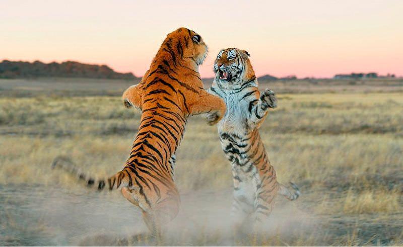 Increíbles fotografías de animales salvajes   Guía Espiritualmente