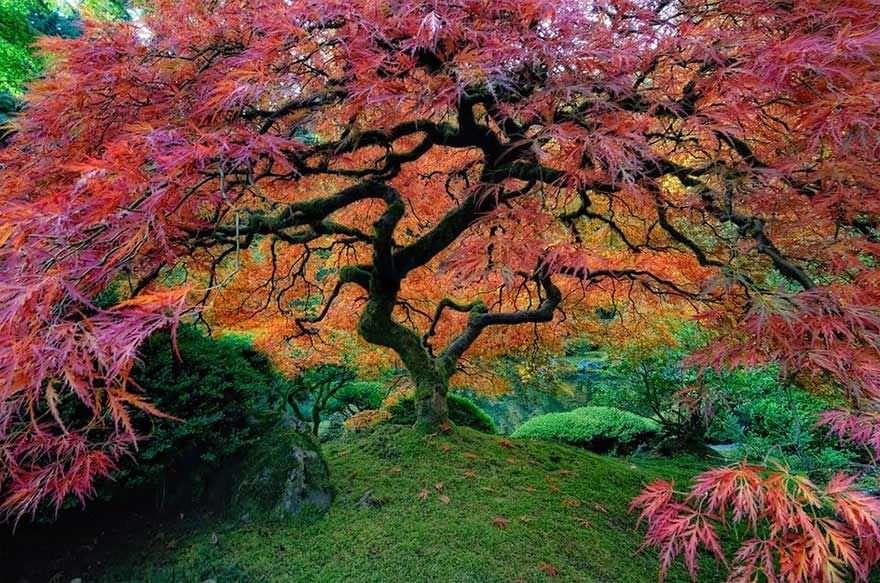 Los árboles más bonitos del mundo