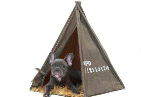 Originales y fabulosas casas para perros