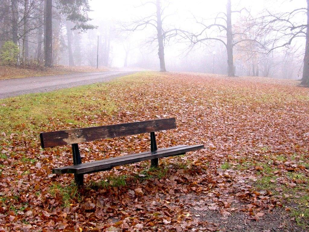 Refranes y frases populares sobre el otoño