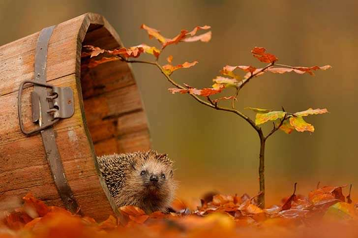 Fotografías para amar el otoño