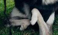 Con un poco de ayuda este perro discapacitado ha vuelto a sonreír, ¿sabes cómo?