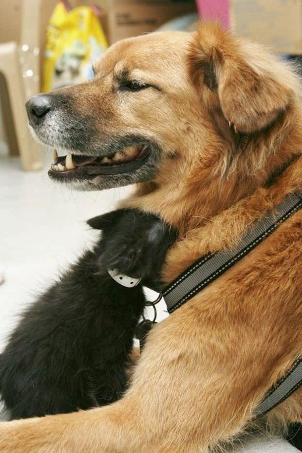 Este perro es un gran ejemplo de solidaridad para todos nosotros 1