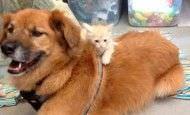 Este perro es un gran ejemplo de solidaridad para todos nosotros