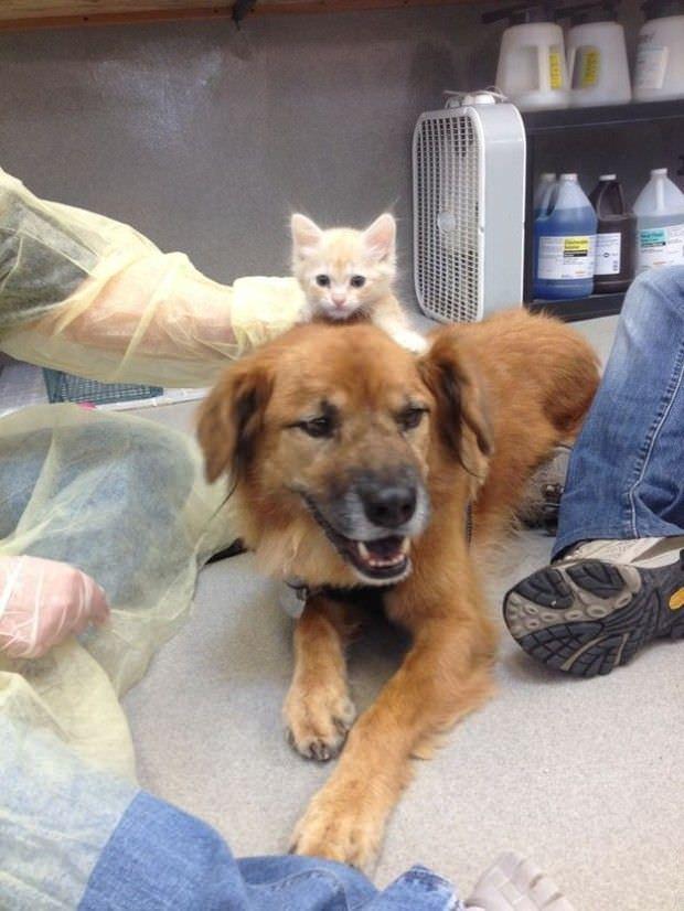 Este perro es un gran ejemplo de solidaridad para todos nosotros 2
