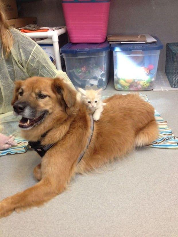 Este perro es un gran ejemplo de solidaridad para todos nosotros 3