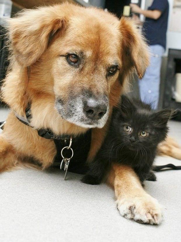 Este perro es un gran ejemplo de solidaridad para todos nosotros 4