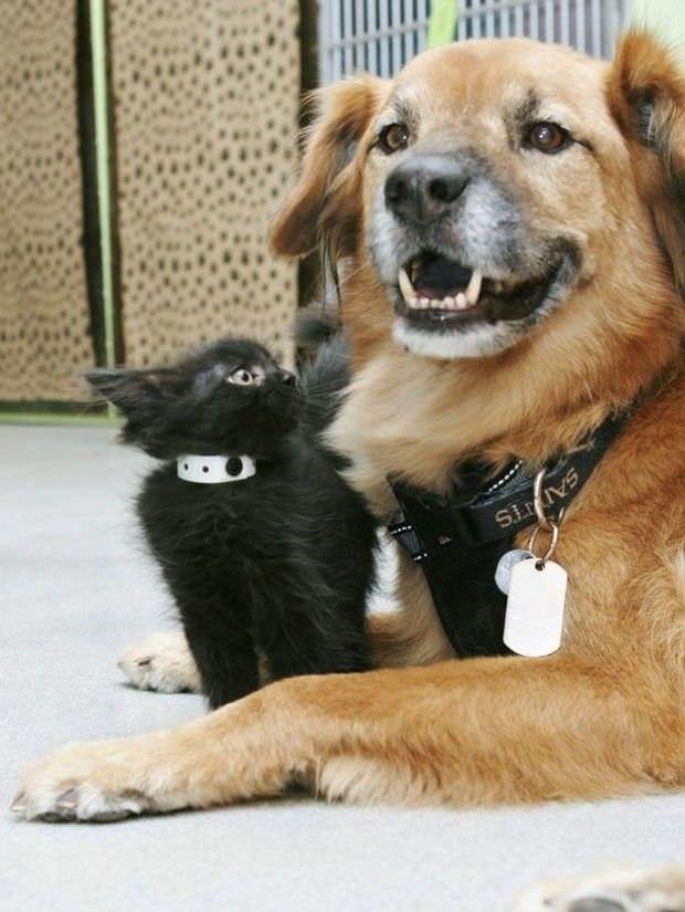 Este perro es un gran ejemplo de solidaridad para todos nosotros 5