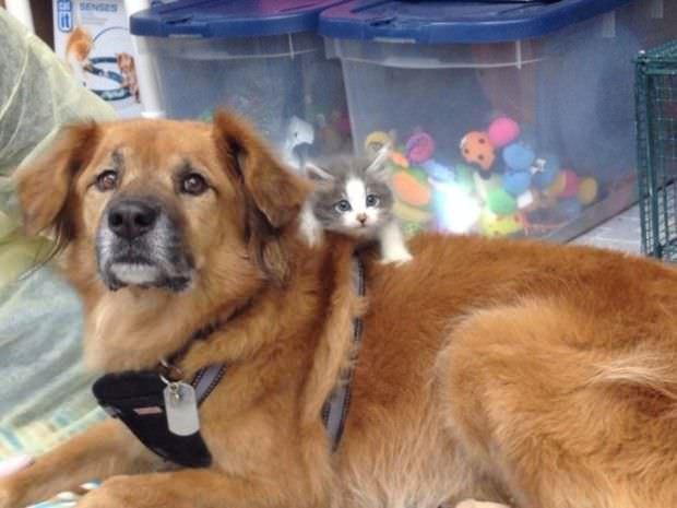 Este perro es un gran ejemplo de solidaridad para todos nosotros 6