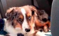 Un perro estaba durmiendo pero al escuchar su canción favorita... ¡mira cómo reacciona!