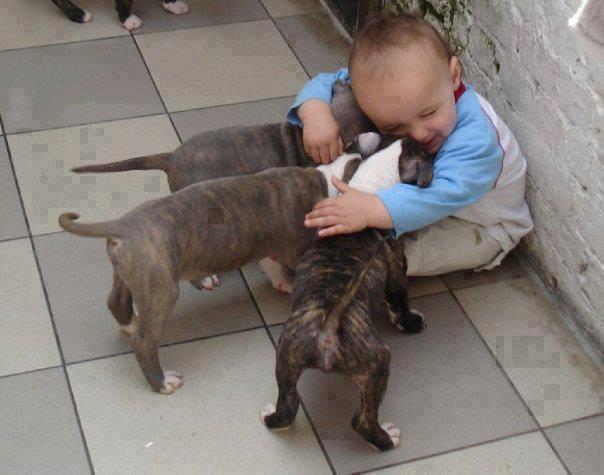 Las mejores fotografías de niños pequeños y sus mascotas 5