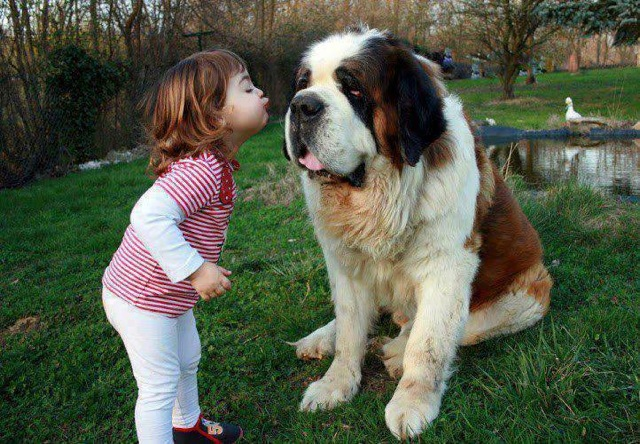 Las mejores fotografías de niños pequeños y sus mascotas 7