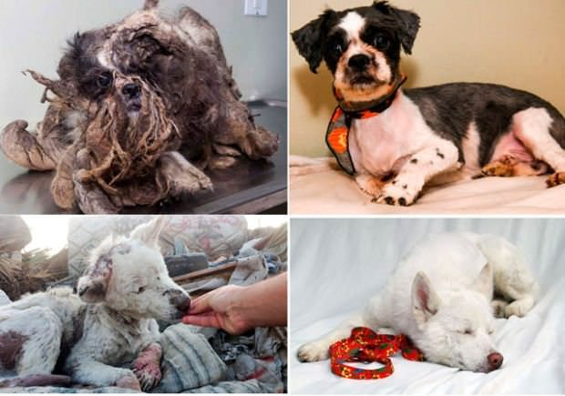 Perros abandonados ¡el antes y el después de ser rescatados! 2