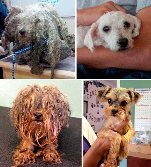 Perros abandonados ¡el antes y el después de ser rescatados! 4