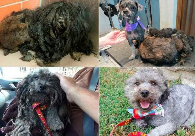 Perros abandonados ¡el antes y el después de ser rescatados! 5