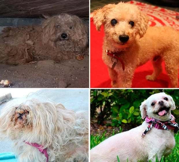 Perros abandonados ¡el antes y el después de ser rescatados! 7