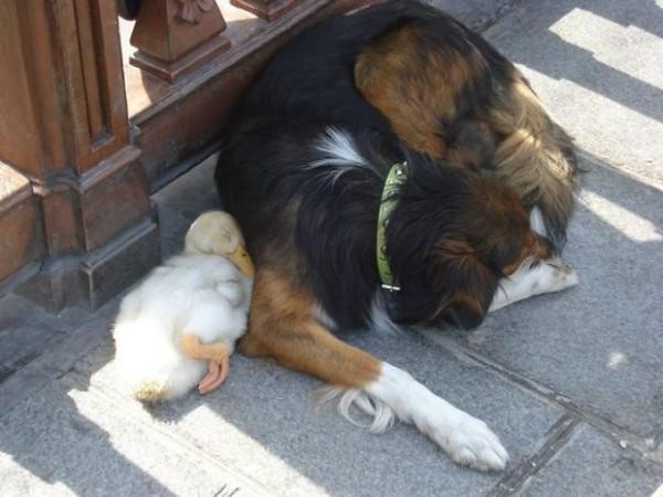 ¡La amistad no tiene límites! En el mundo animal tampoco 1