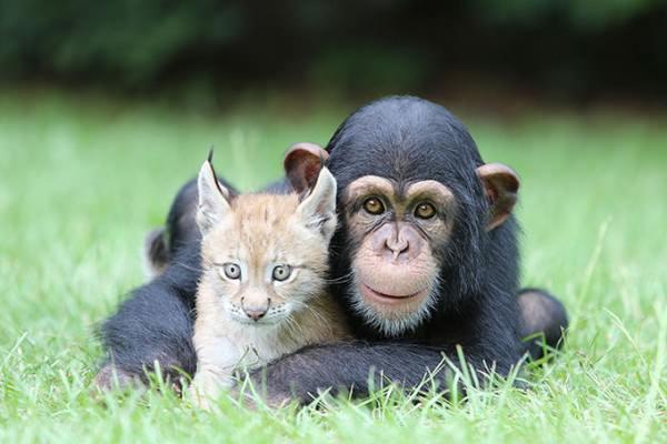 ¡La amistad no tiene límites! En el mundo animal tampoco 10