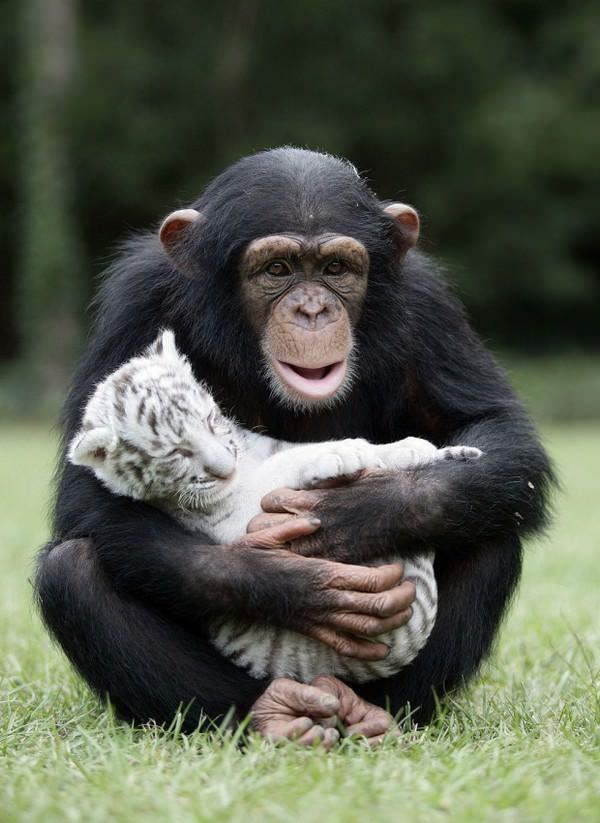 ¡La amistad no tiene límites! En el mundo animal tampoco 11