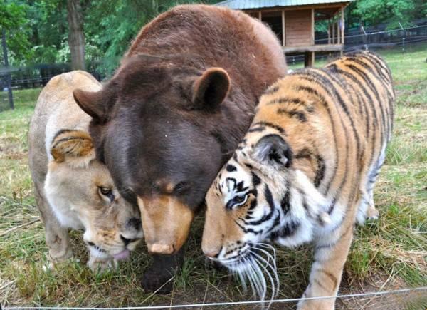 ¡La amistad no tiene límites! En el mundo animal tampoco 12