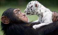 ¡La amistad no tiene límites! En el mundo animal tampoco