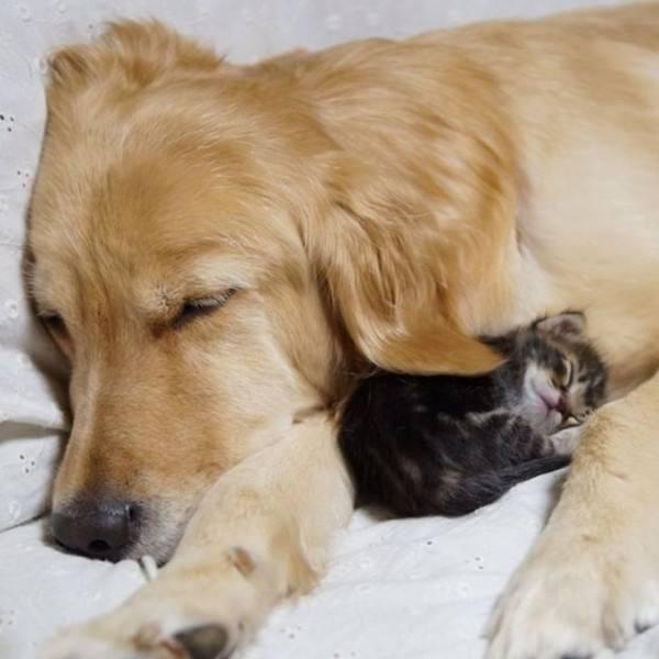 ¡La amistad no tiene límites! En el mundo animal tampoco 2