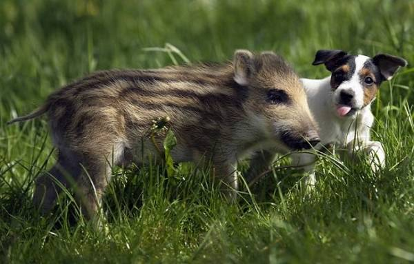¡La amistad no tiene límites! En el mundo animal tampoco 3