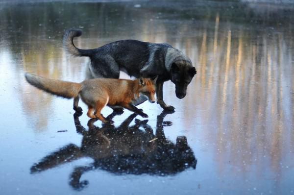¡La amistad no tiene límites! En el mundo animal tampoco 4